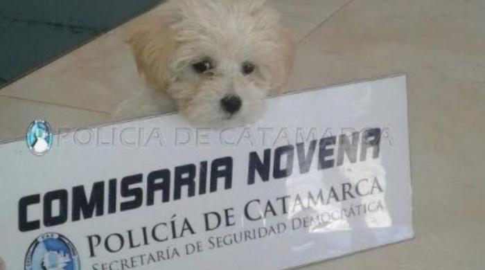 Policías recuperan perro de raza robado