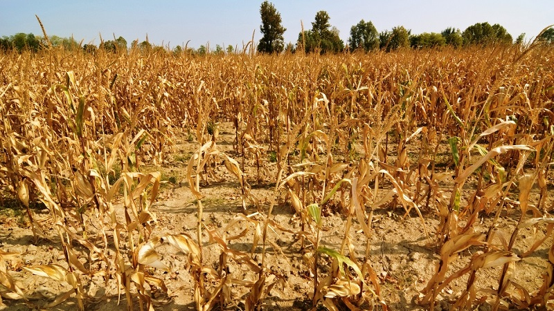Campo: La sequía afecta las principales zonas rurales del pais