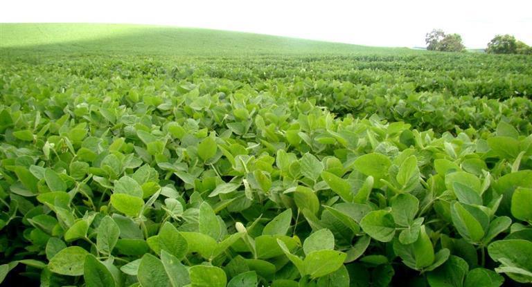 La soja cerró casi estable a u$s 374,06