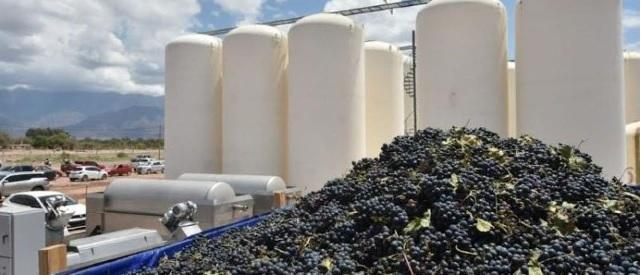 Más de $9 millones para los productores vitícolas de Fiambalá